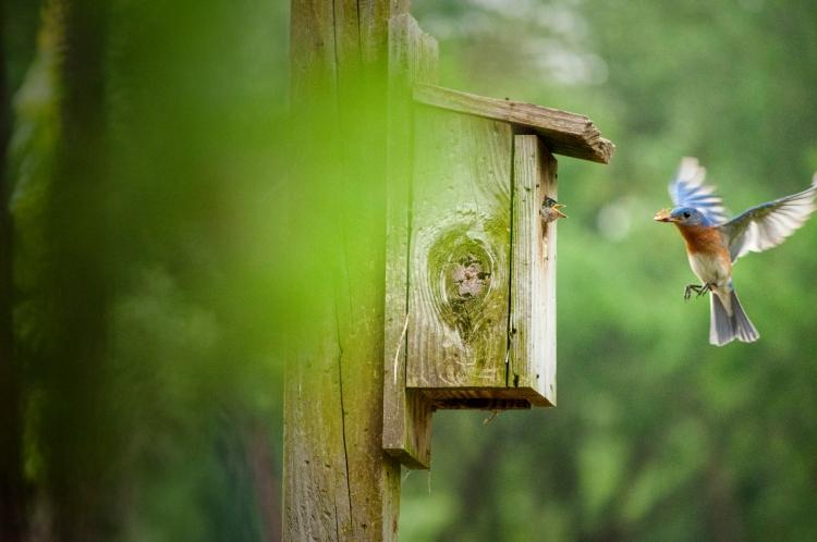 Blue Bird brings breakfast